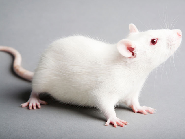 European Commission Says It Wants To Curtail Animal Testing, But Can't Just Yet
