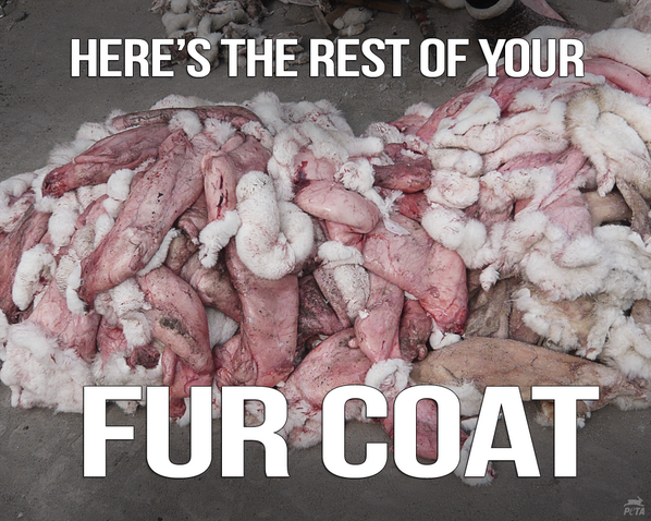 San Francisco bans fur sales. Should we applaud now?